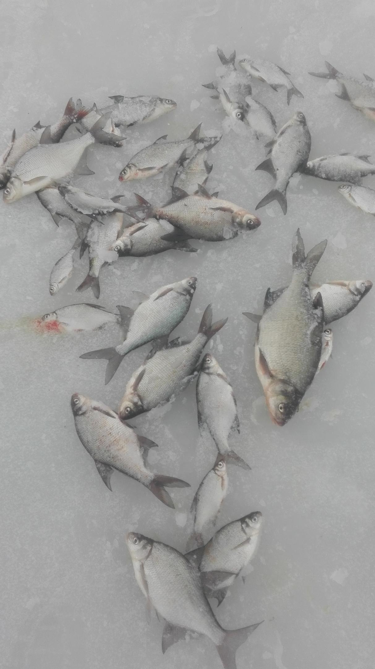 Снова посетил озеро,с надеждой на то что подлещики-лещи ...   Отчеты о рыбалке в Беларуси