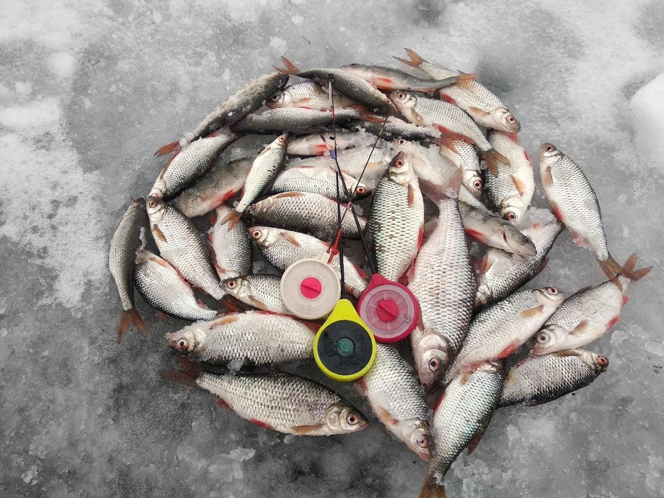 Вот такая выдалась рождественская рыбалочка. Решил далеко не ...   Отчеты о рыбалке в Беларуси