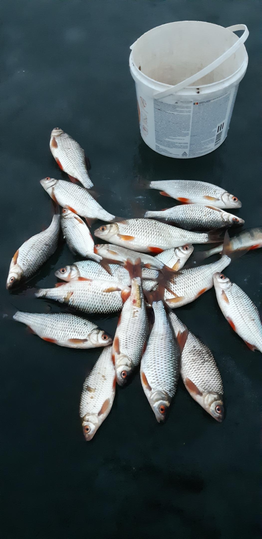 Здравствуйте, друзья! Уже сегодня намечается третий к ряду ... | Отчеты о рыбалке в Беларуси