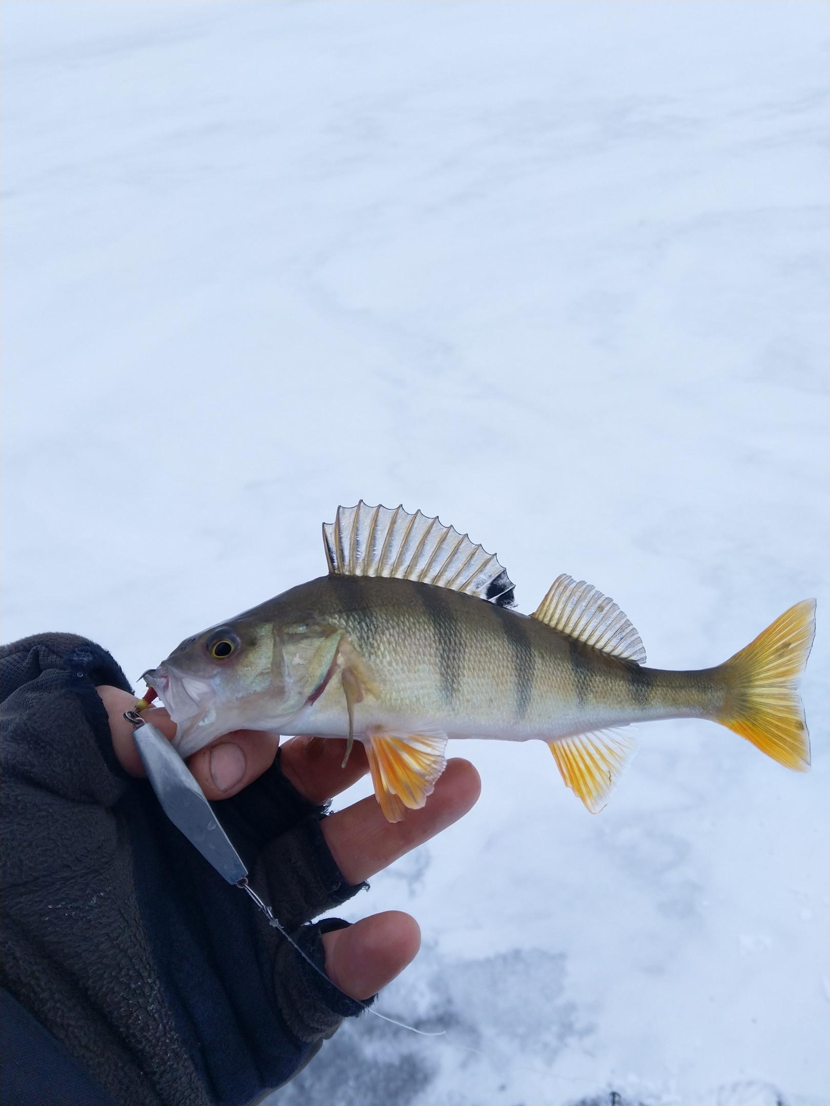 Были сегодня, в составе 4-х человек. Лёд с ... | Отчеты о рыбалке в Беларуси