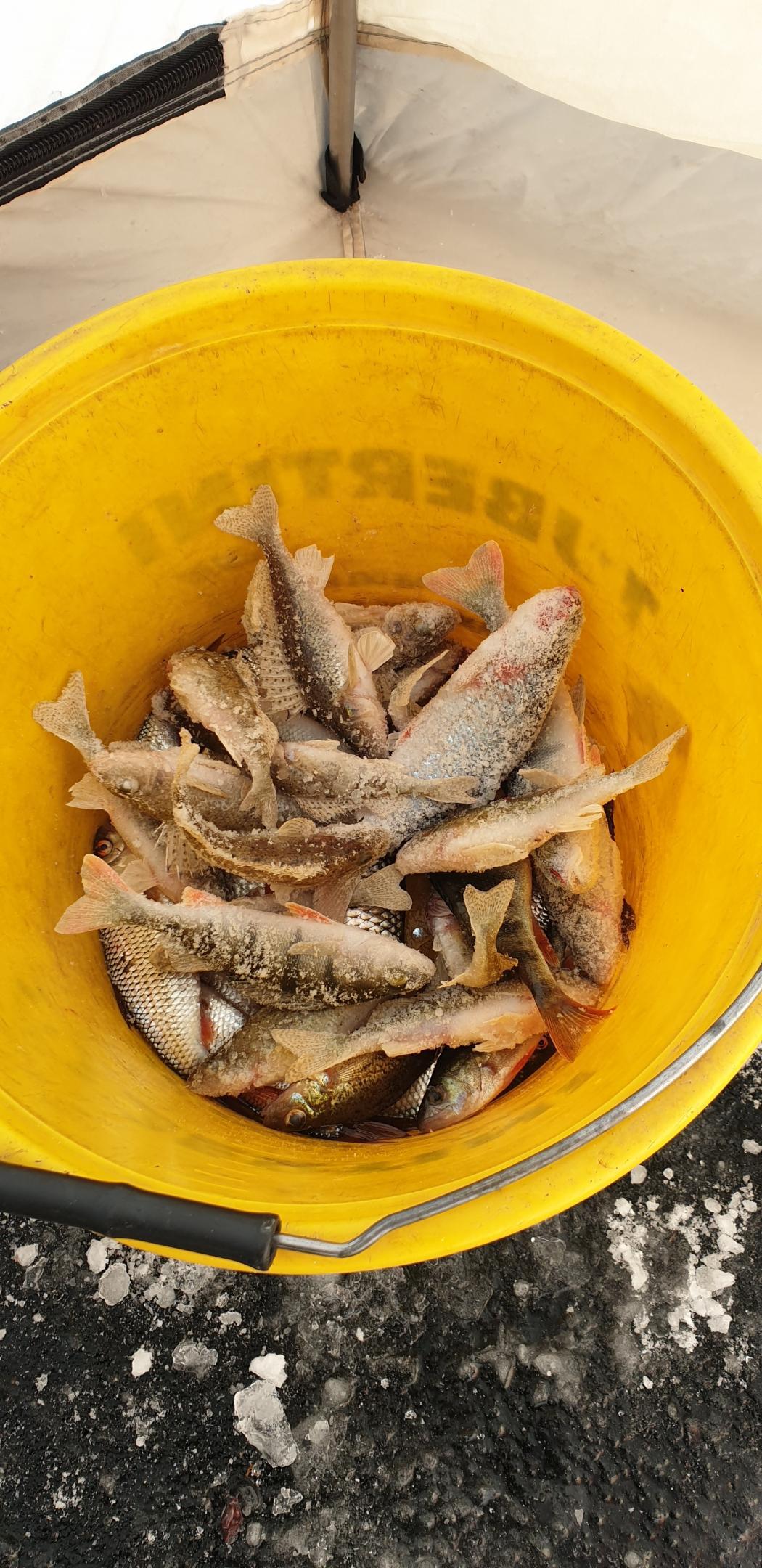 Сегодня рыбачили. Заезжали от профилактория. Утром -15. Днем ... | Отчеты о рыбалке в Беларуси