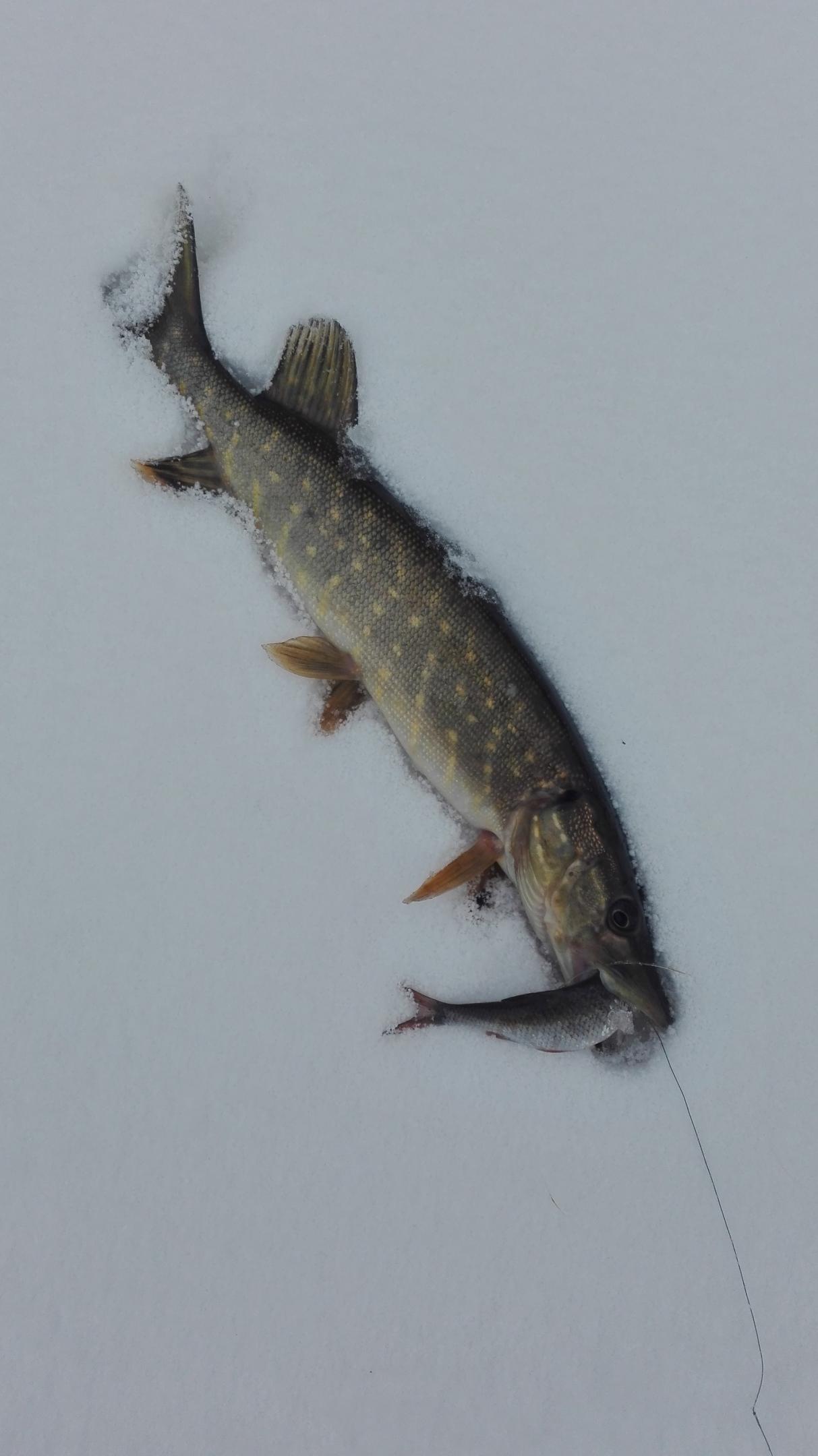Так мечтал , шоб Мухавец замерз весь. Ну ... | Отчеты о рыбалке в Беларуси
