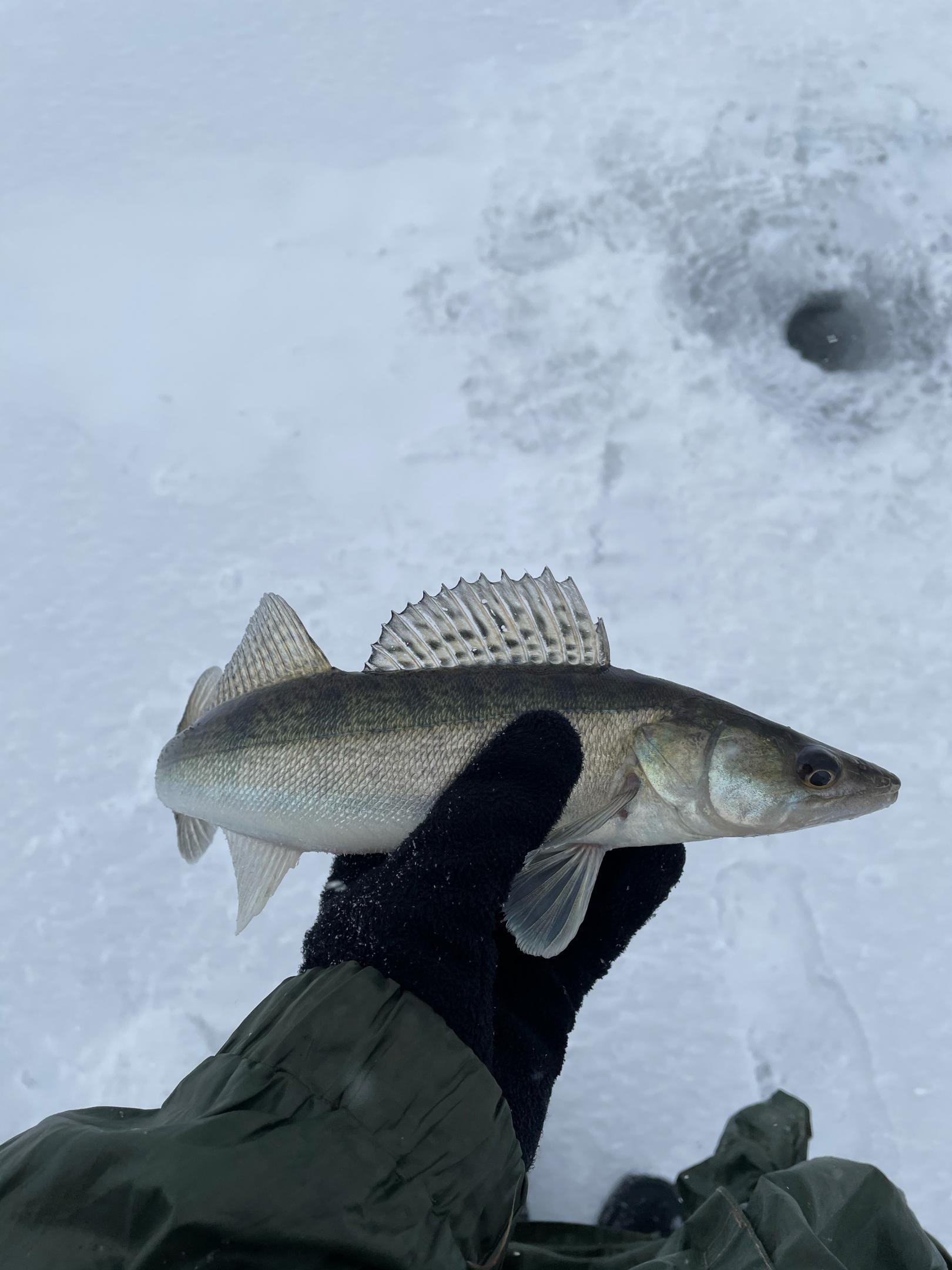 был, пытался, поймал. но маленькие (~30 см, ~30 ... | Отчеты о рыбалке в Беларуси