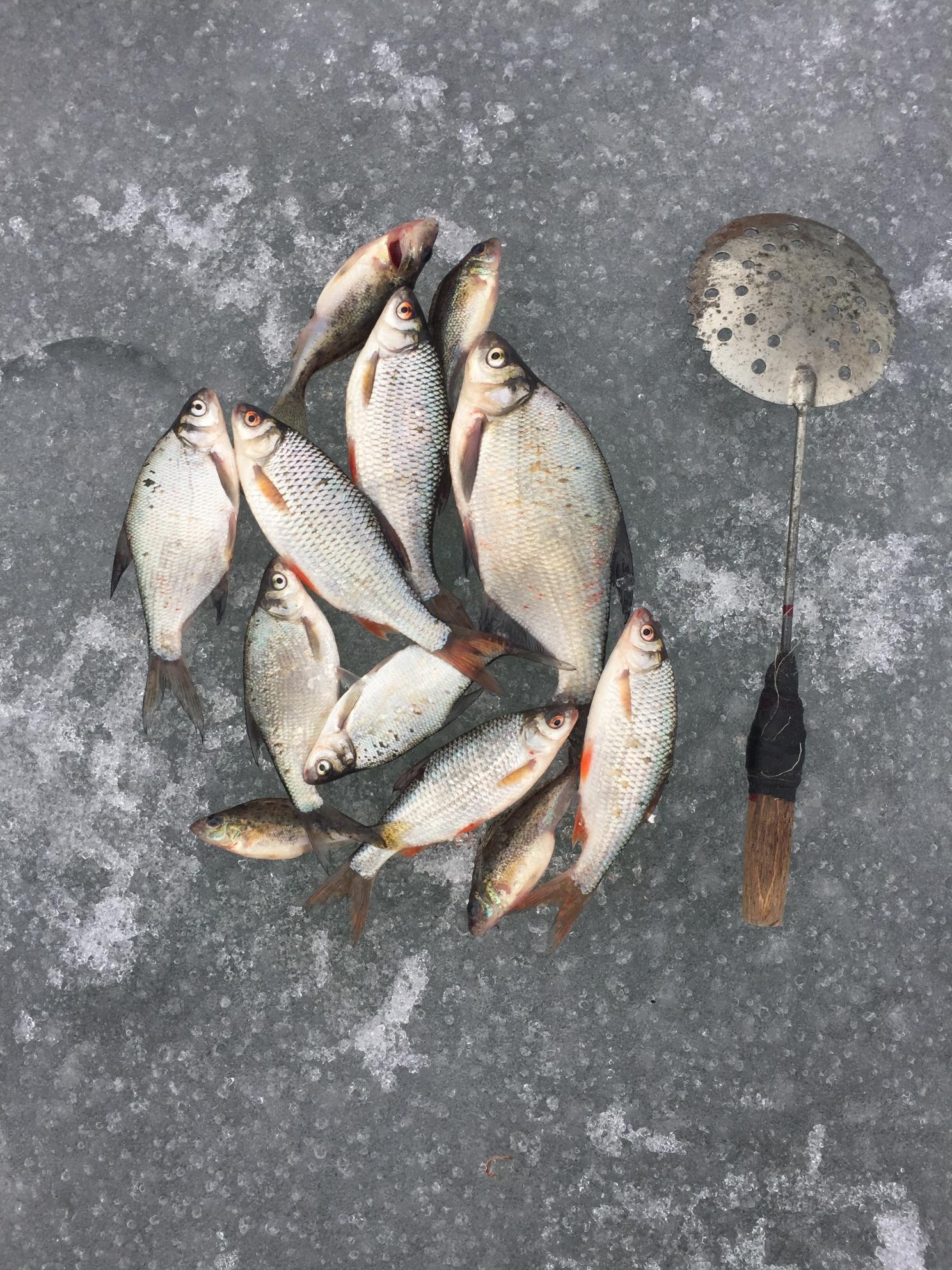 Доброго Всем здоровья! Сегодня заход на лёд в ... | Отчеты о рыбалке в Беларуси