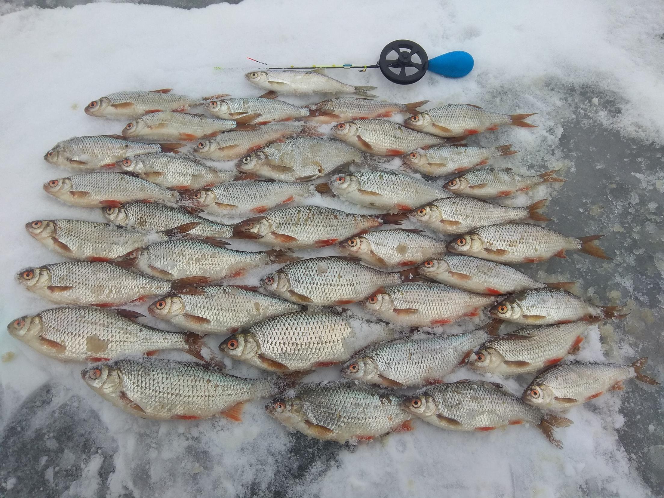 Поддался результативным сообщениям с Ратомского и в субботу ...   Отчеты о рыбалке в Беларуси