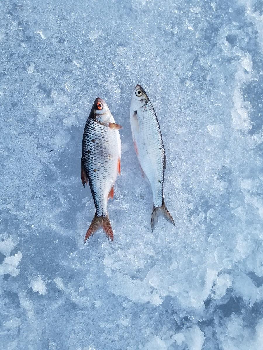 Понедельник, 15 марта, 15-00. На стоянке возле лодочной ... | Отчеты о рыбалке в Беларуси