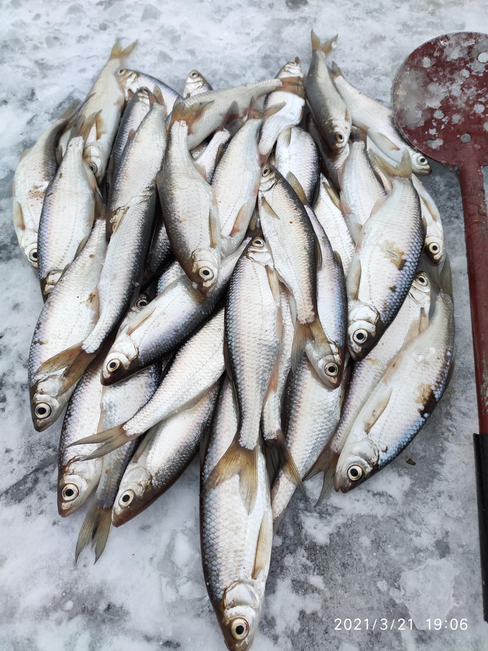 Таки не утерпел, поперся за уклейкой) Не торопился ... | Отчеты о рыбалке в Беларуси