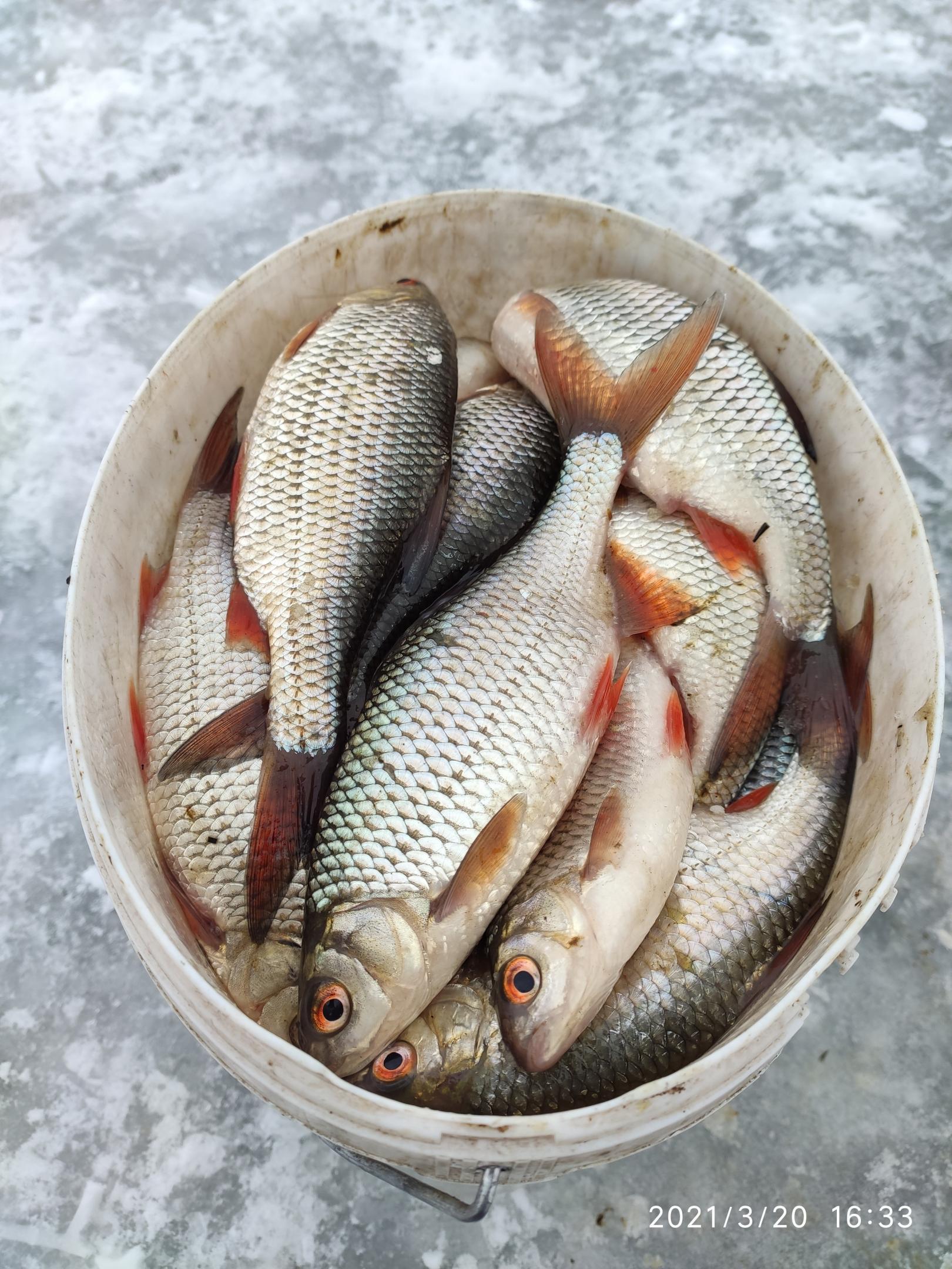 Тоже по плану был сегодня Ратомский залив с ...   Отчеты о рыбалке в Беларуси