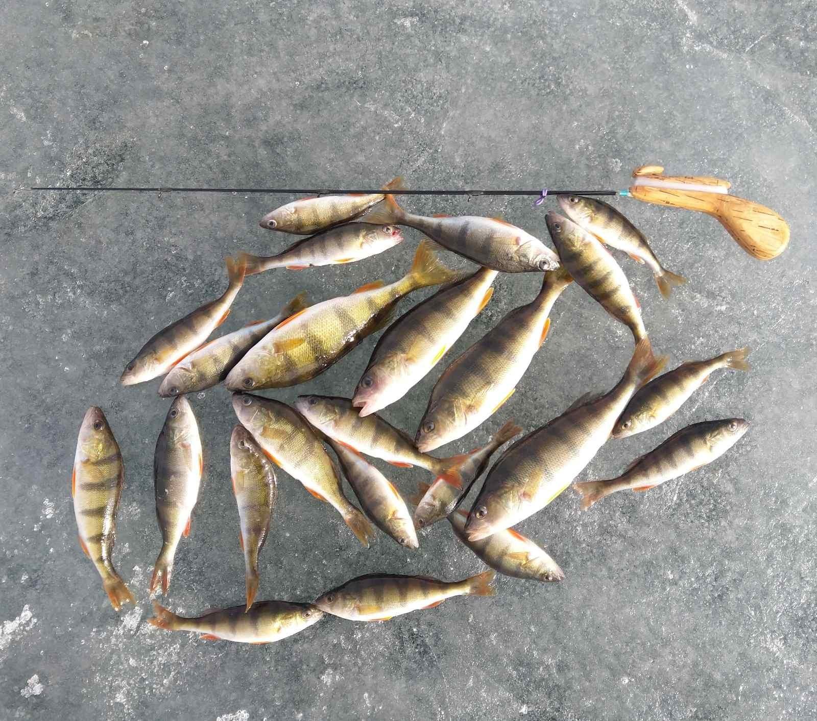 Вчера выбрались компанией из 5 человек на Нарочь ...   Отчеты о рыбалке в Беларуси