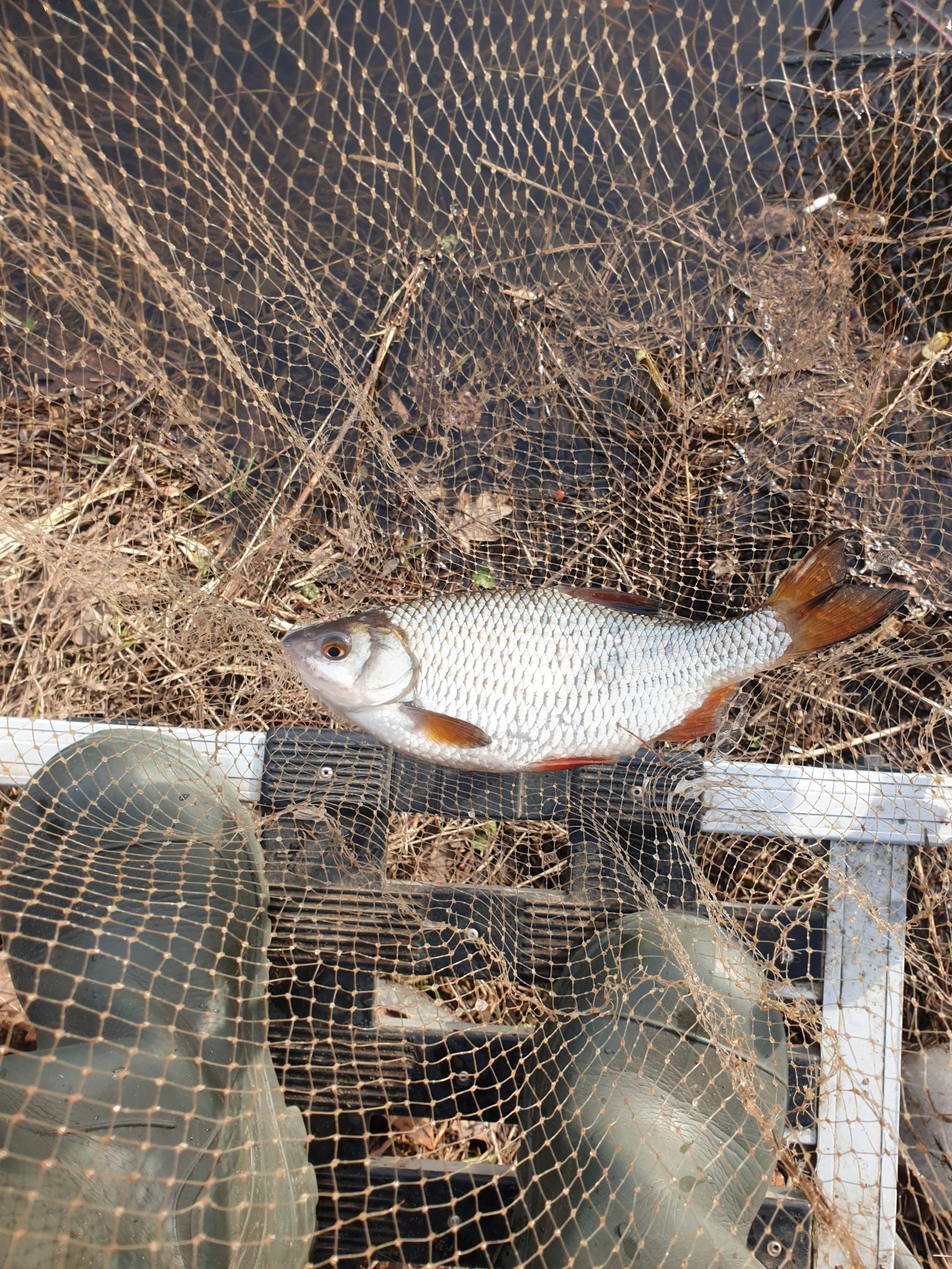 Открываемся на Свислочи, ниже водохранилища.Неделя выдалась теплой, и ...   Отчеты о рыбалке в Беларуси