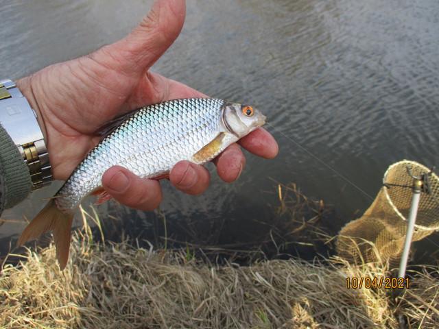 .После последнего посещения канала в Заславле, решил повторить ... | Отчеты о рыбалке в Беларуси