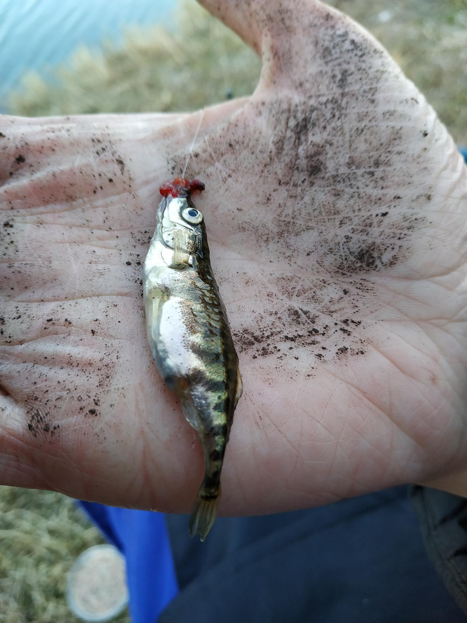Прочитал с утра пост изгой и решил открыть ... | Отчеты о рыбалке в Беларуси