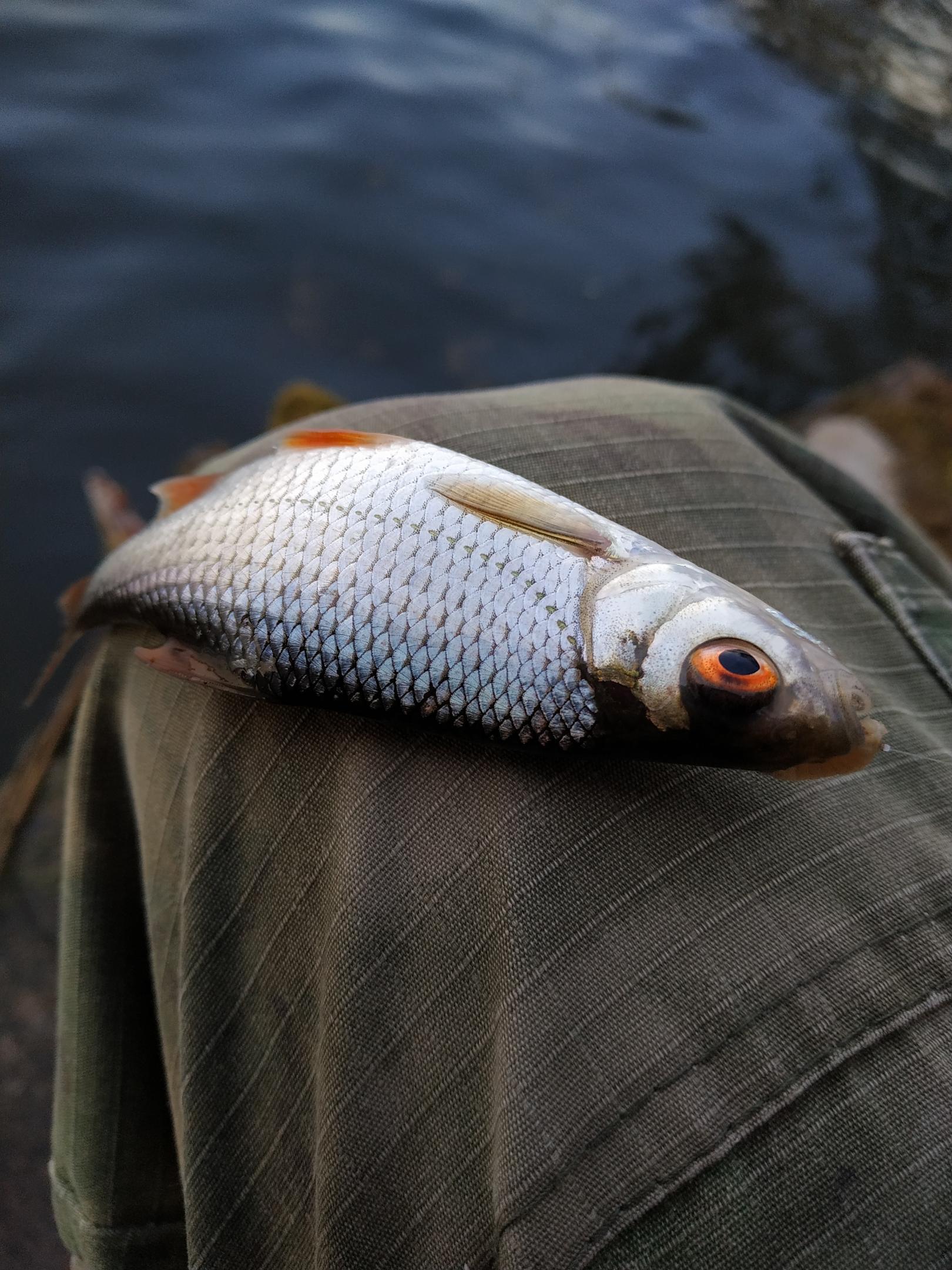 Сильный ветер не позволил ловить на привычном месте ...   Отчеты о рыбалке в Беларуси