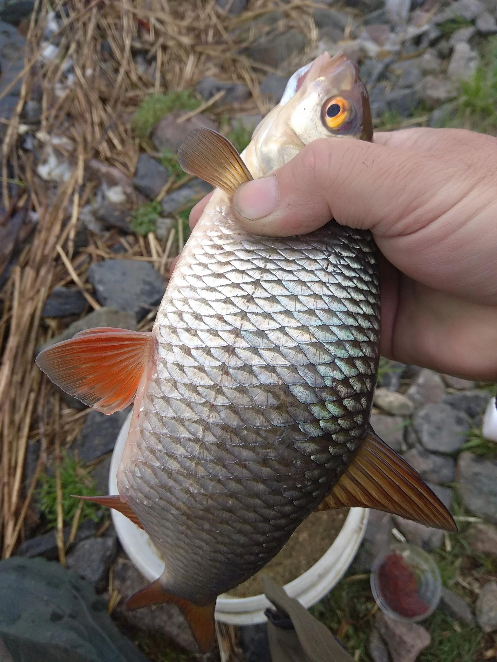 Вчера с утра и до 19 на реке ... | Отчеты о рыбалке в Беларуси