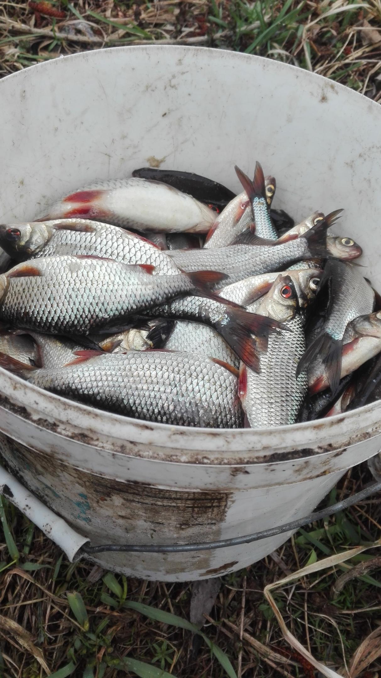 Воду подняли, навигация открылась, а по клеву мало ... | Отчеты о рыбалке в Беларуси