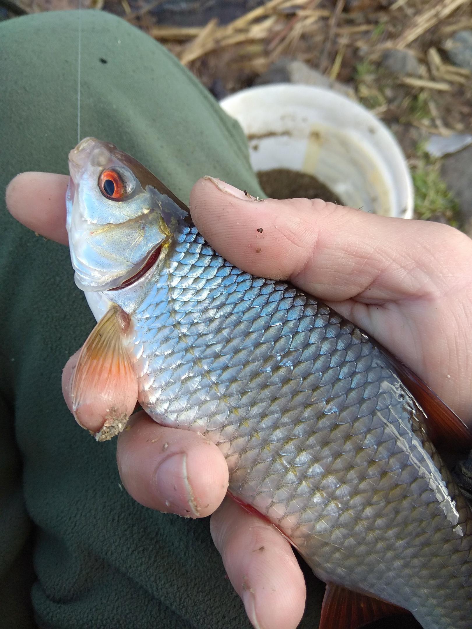 Все выходные , и ещё и пол понедельника ... | Отчеты о рыбалке в Беларуси