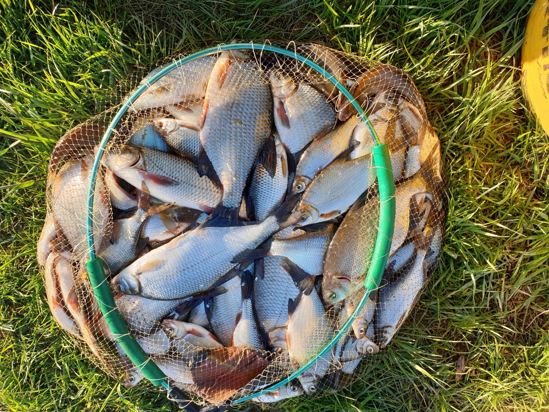 Березина – начало.Погоды последние дни стояли не по-весеннему ... | Отчеты о рыбалке в Беларуси