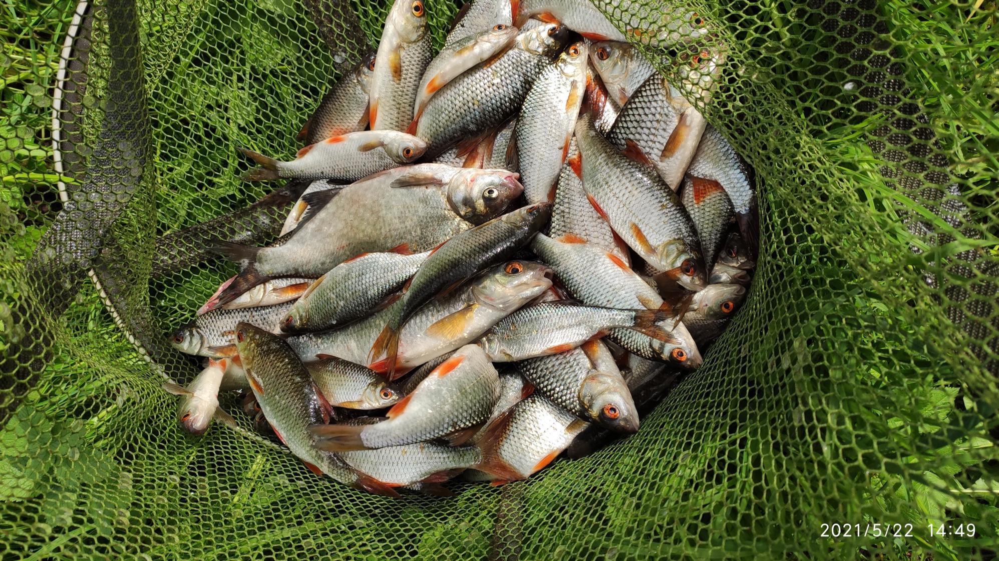 Был сегодня, мах 5м, ловил с 7 до ... | Отчеты о рыбалке в Беларуси