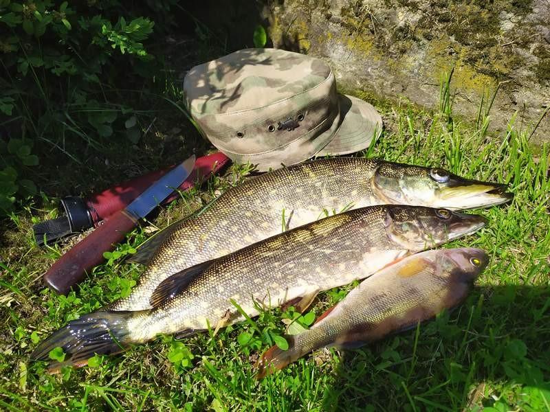 Наконец потеплело. Прогулялся по берегам любимой реки. Уровень ... | Отчеты о рыбалке в Беларуси