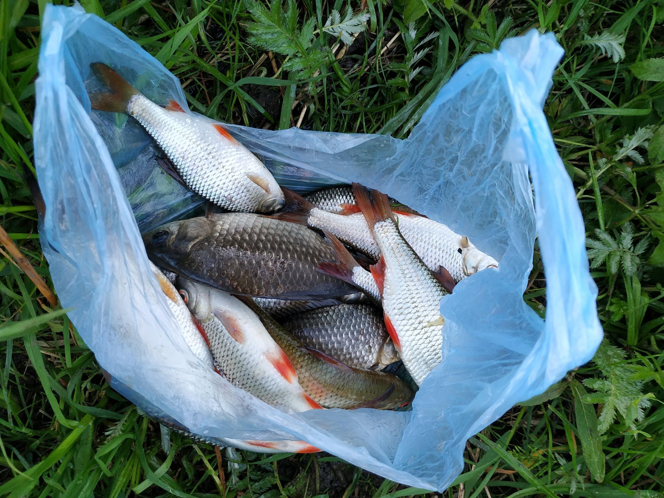 Птичь - водоем контрастов. Вчера за вечер лишь ... | Отчеты о рыбалке в Беларуси