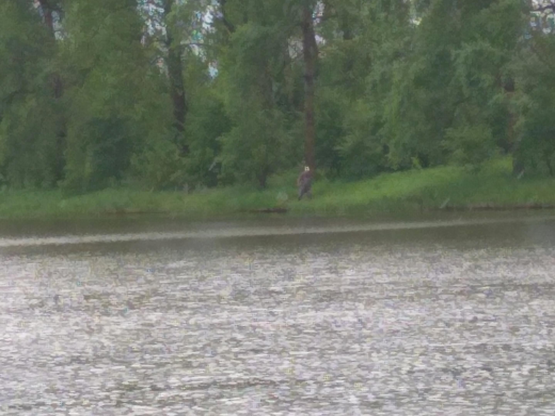Сегодня опять Старица. Подъем в 3-30, за окном ... | Отчеты о рыбалке в Беларуси