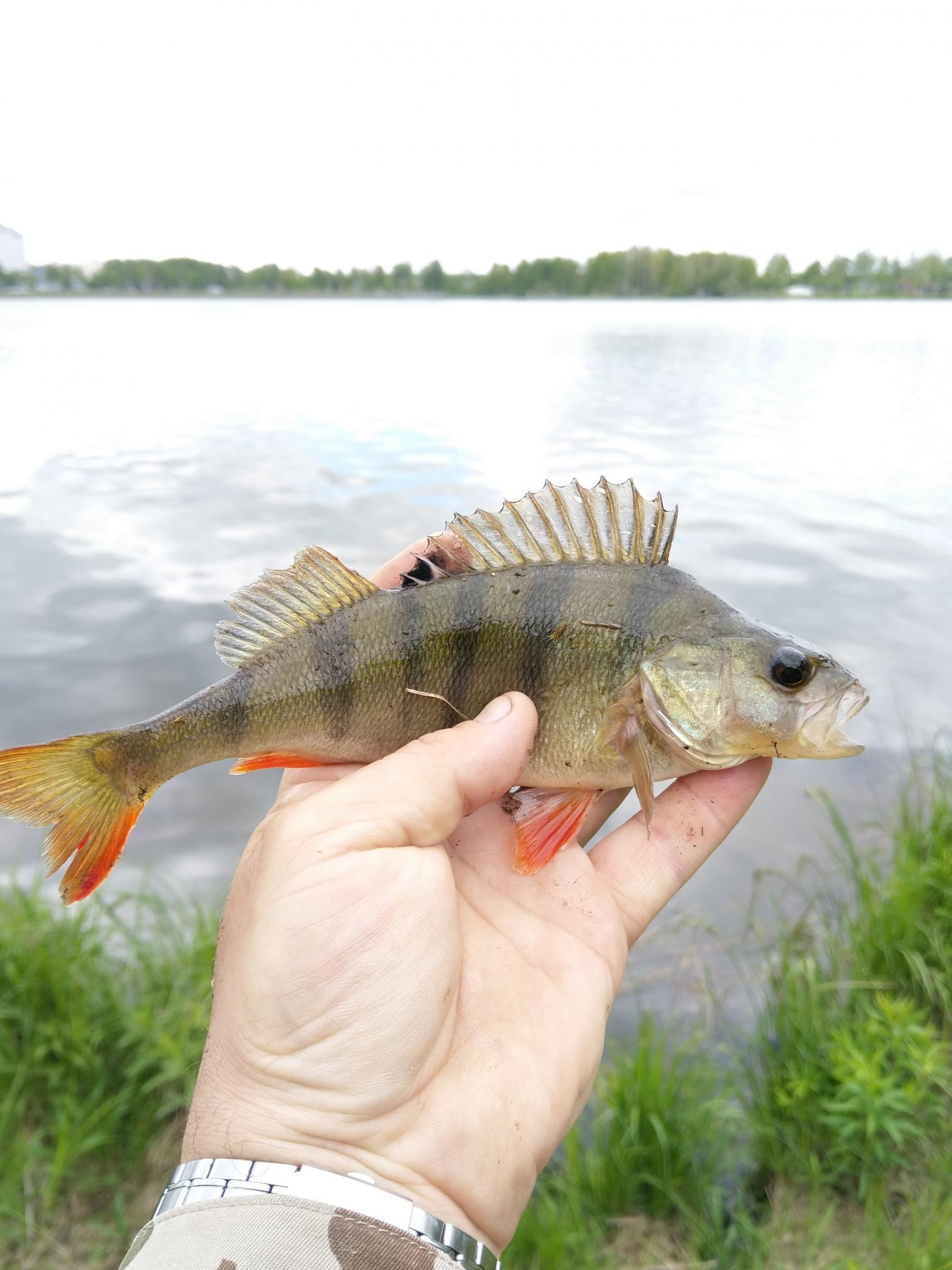 Сегодня решили с Наташей прогУЛяться по Дроздам ...   Отчеты о рыбалке в Беларуси