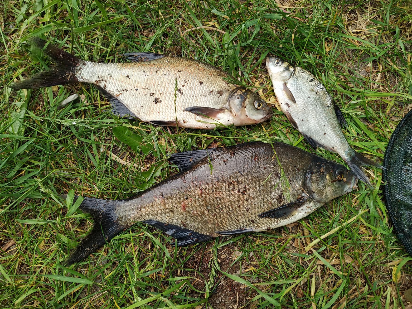 И куда только улетучивается вся ночная романтика с ... | Отчеты о рыбалке в Беларуси