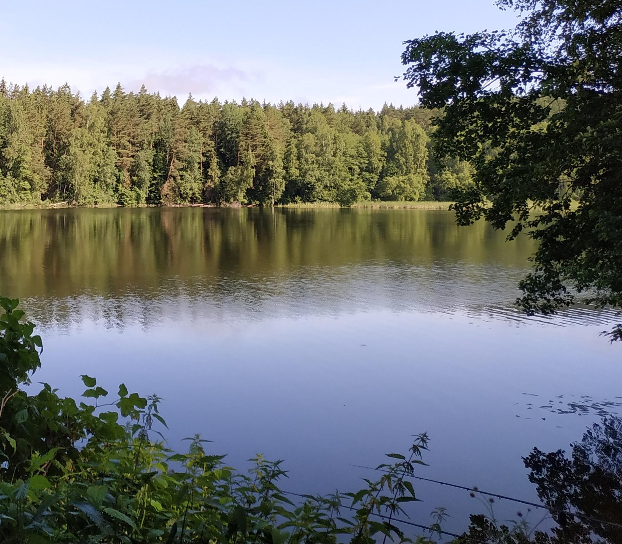 Ну что, летняя Вяча - всплески воды и ... | Отчеты о рыбалке в Беларуси