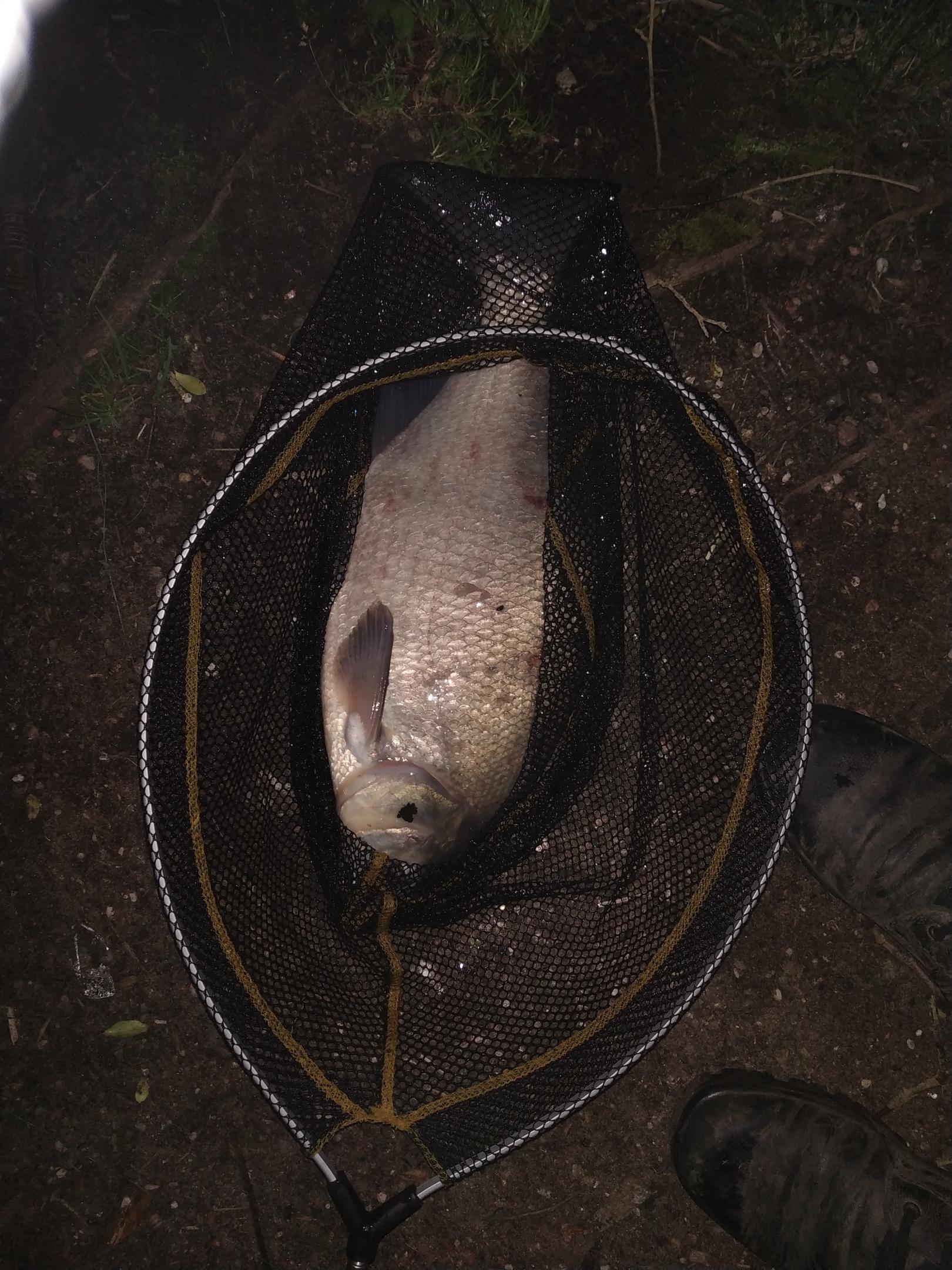 Открытие ночного сезона - особое событие. Это как ... | Отчеты о рыбалке в Беларуси