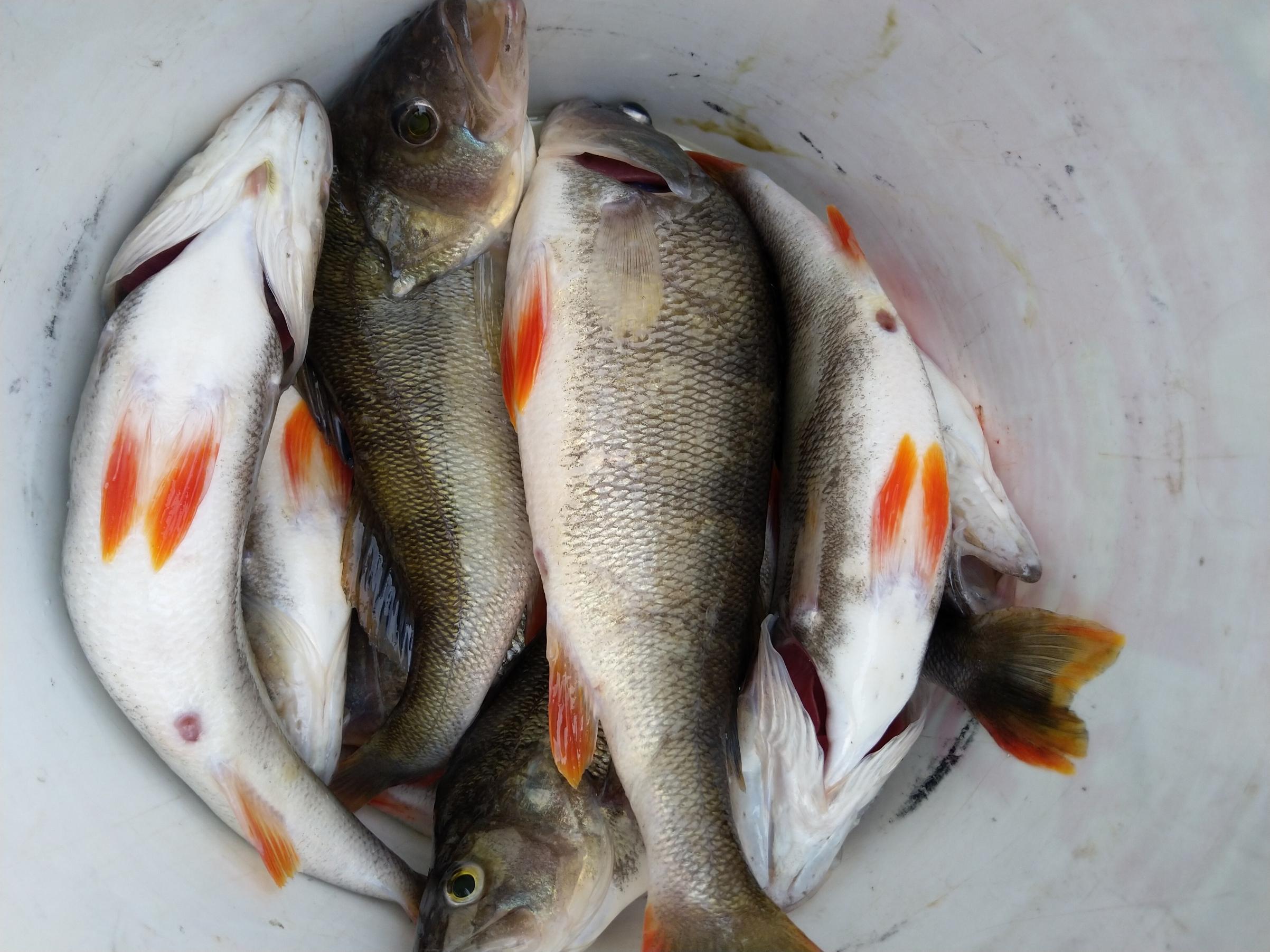 Открывались большой компанией на ВВ. В пятницу вечером ... | Отчеты о рыбалке в Беларуси