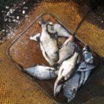 По случаю шикарной погоды, в минувшие выходные рыбалить поехал