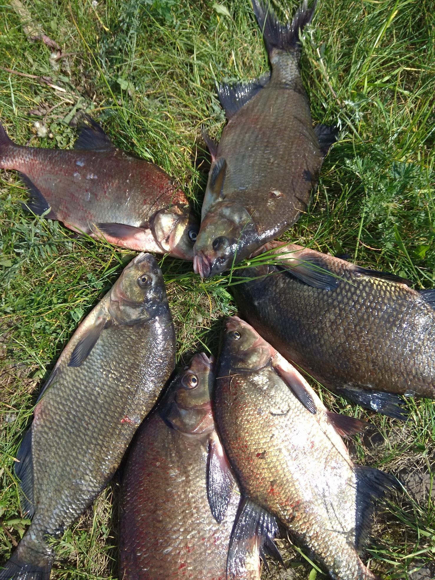 Сегодня и я открыл полноценный фидерный сезон. Время ... | Отчеты о рыбалке в Беларуси