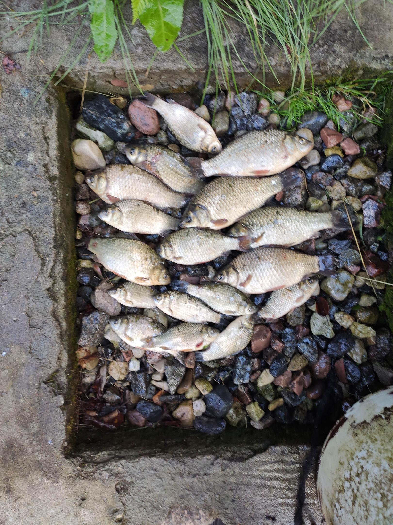 Пару раз съездил на канал в районе Вязынки,в ... | Отчеты о рыбалке в Беларуси