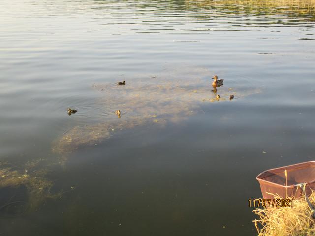 После субботнего фитнеса со спиннингом, решил провести воскресный ... | Отчеты о рыбалке в Беларуси