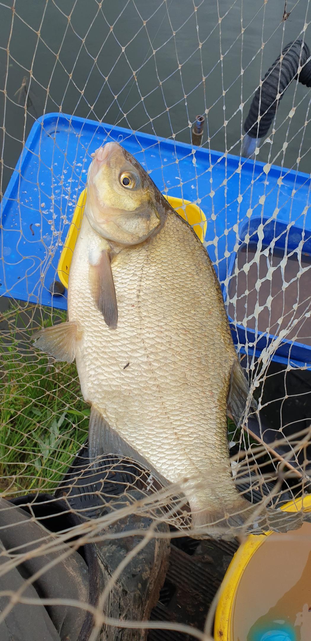 Продолжение следует.Со старта уклейка зверствует. Не дает возможности ... | Отчеты о рыбалке в Беларуси