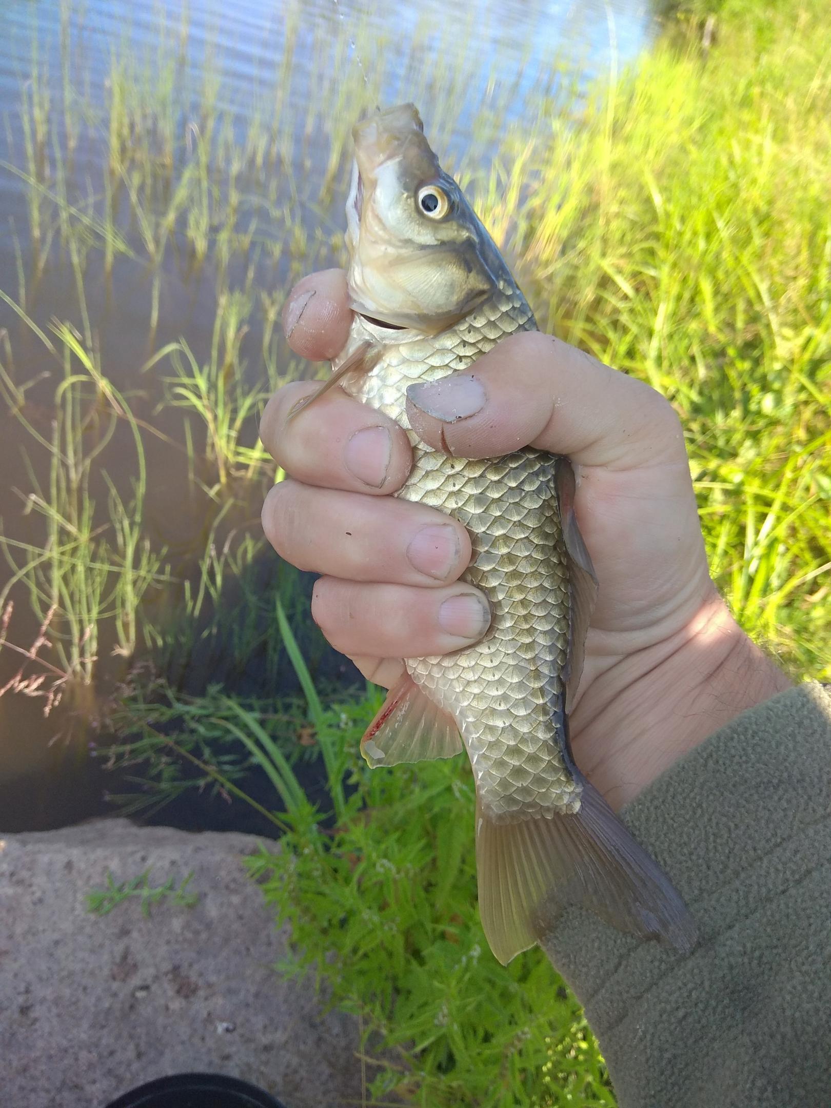 Сегодня проехал на три часа за плотвой, тоже ... | Отчеты о рыбалке в Беларуси