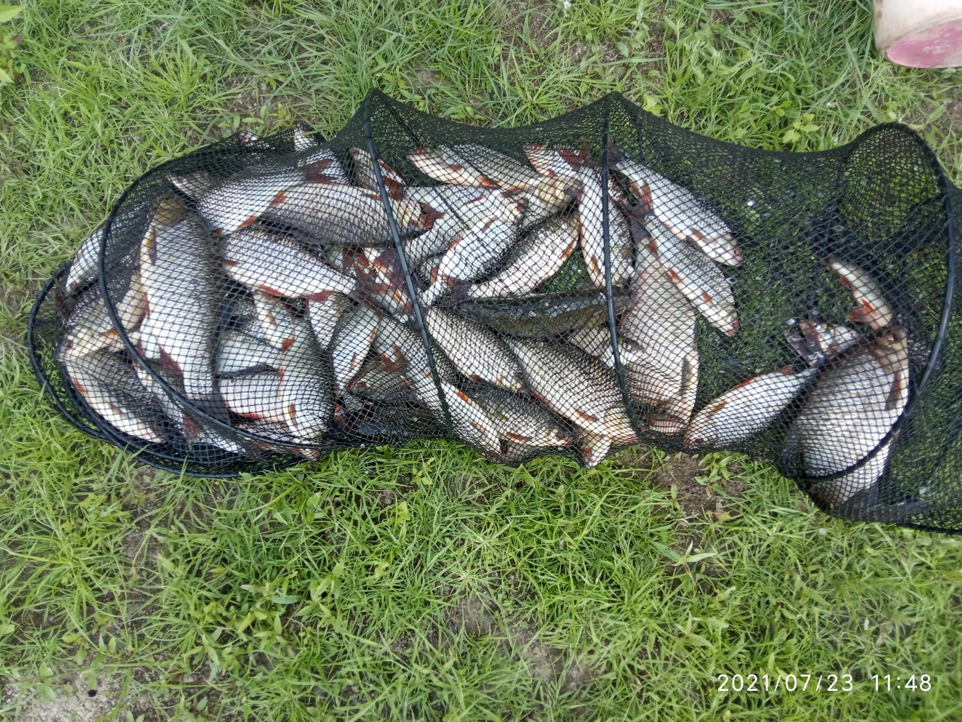 Только с Припяти. С 3х часов вчера, до ... | Отчеты о рыбалке в Беларуси