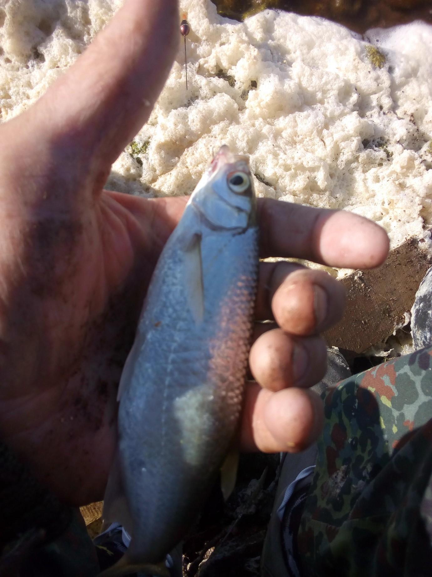 Чуть не поглотила меня пена морская в воскресенье ... | Отчеты о рыбалке в Беларуси