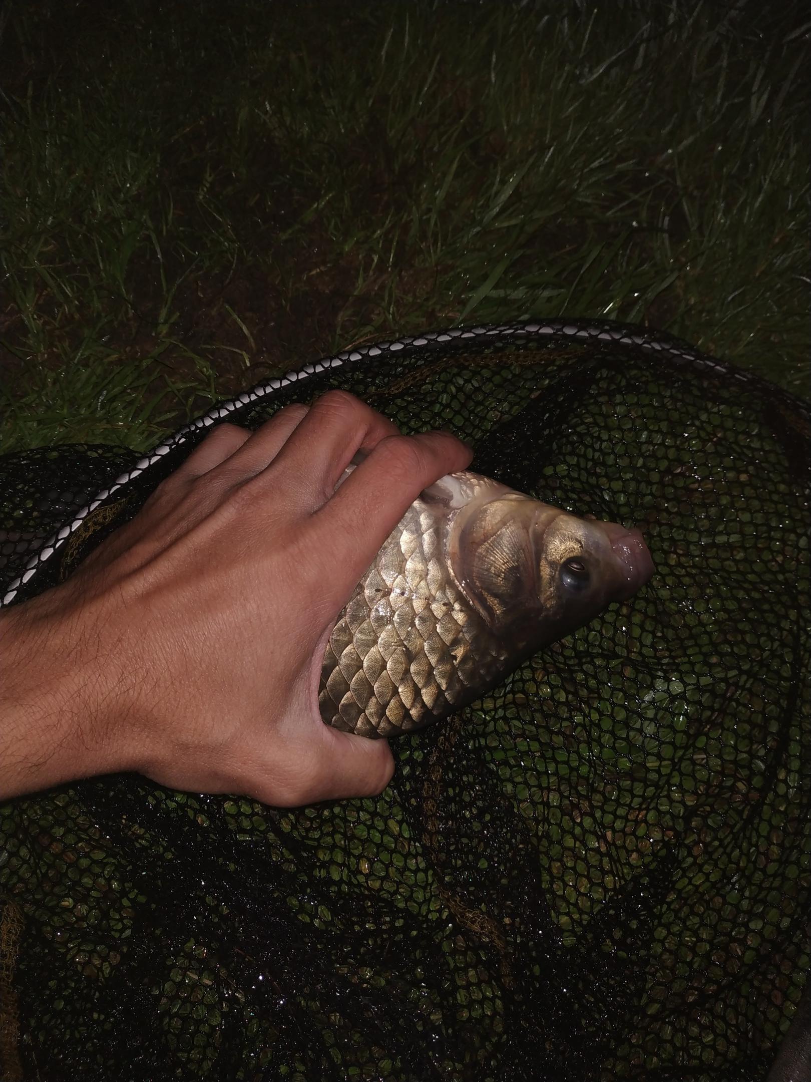 Еще одна ночная рыбалка на Птичи.Мое место слева ... | Отчеты о рыбалке в Беларуси