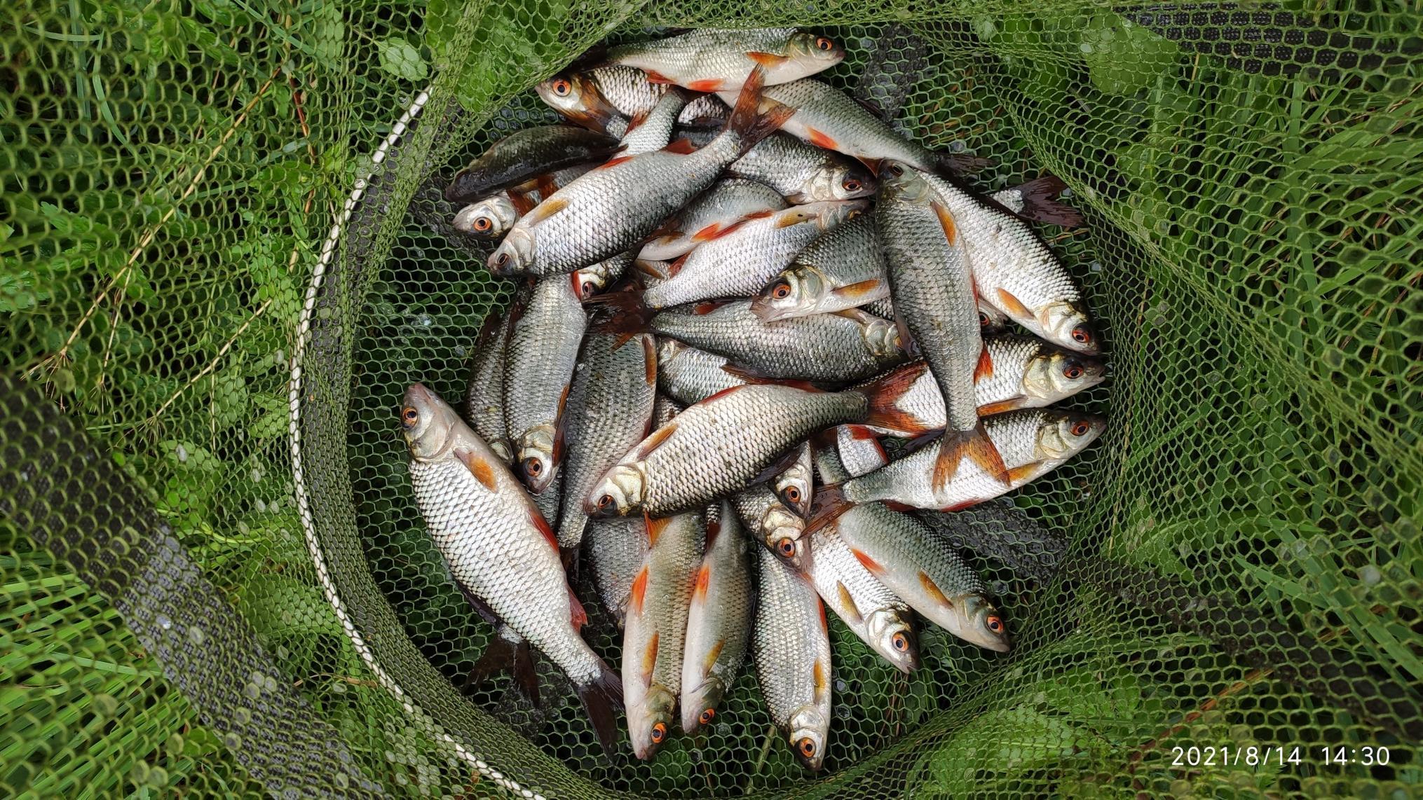 Как вы думаете, что делает рыбанутый ранним утром ... | Отчеты о рыбалке в Беларуси