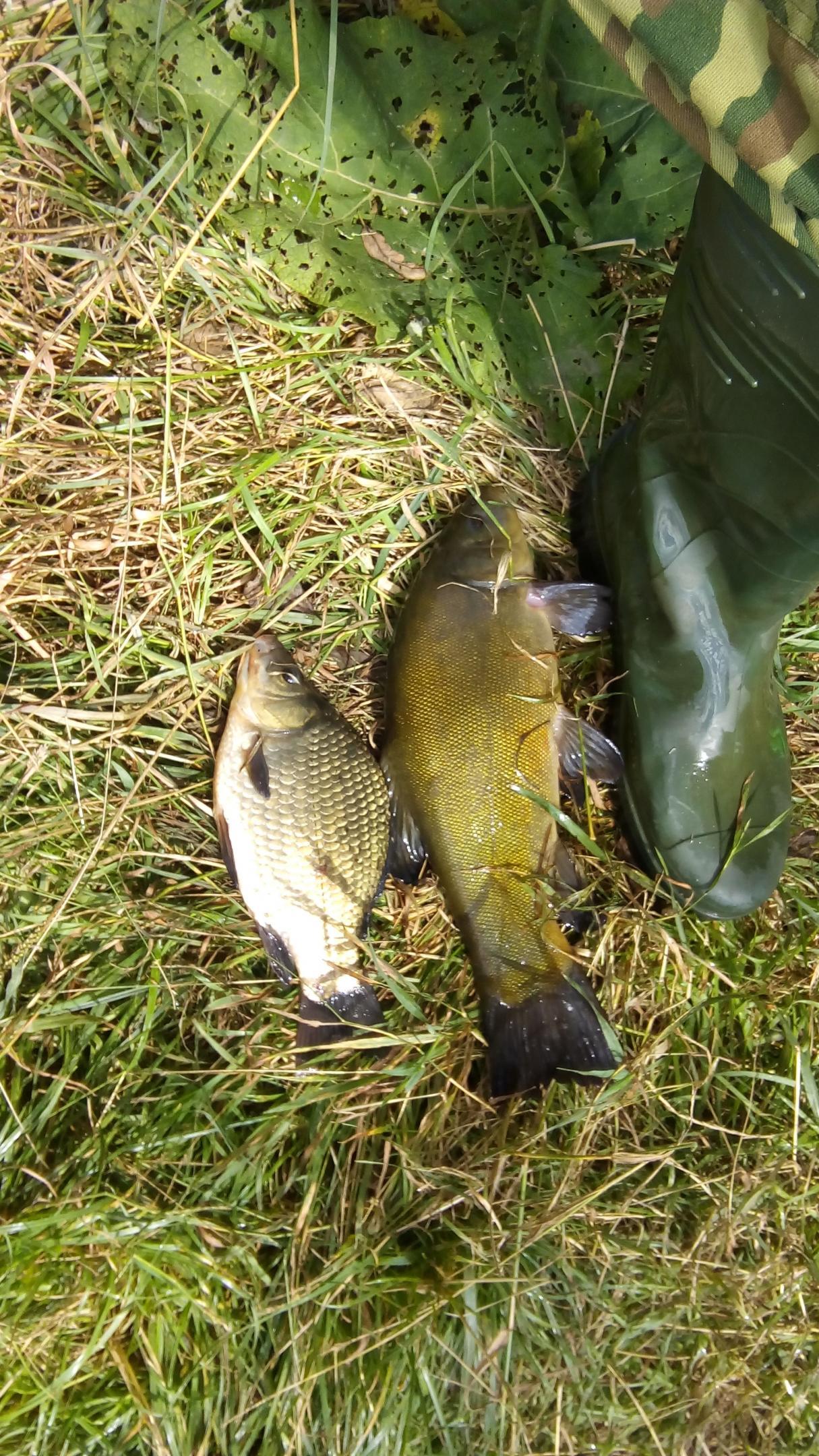 Небольшой обзор ловли за август, в водоемах западной ...   Отчеты о рыбалке в Беларуси