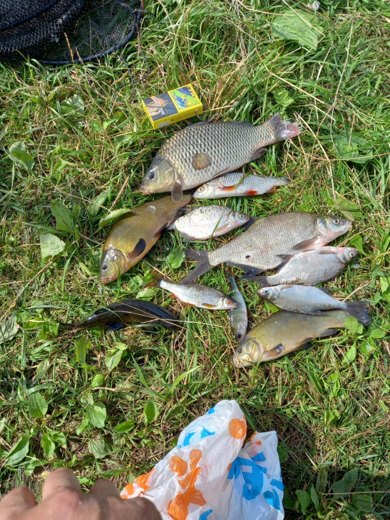 Ночь с пт на сб. Настраивался на леща ... | Отчеты о рыбалке в Беларуси