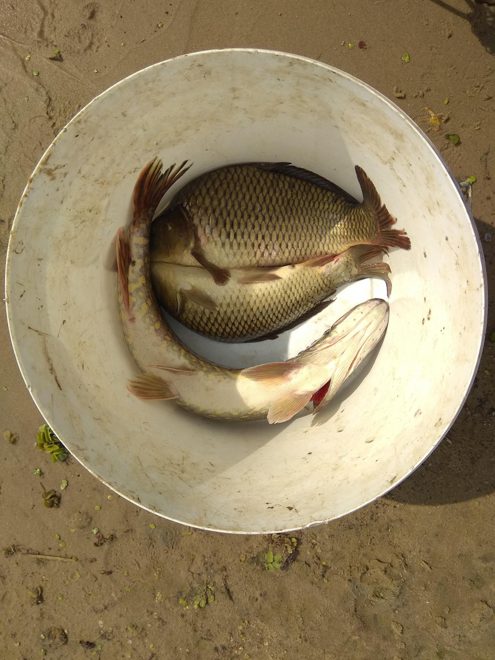 Припять, дубль два. После прошлой рыбалки осталась какая ...   Отчеты о рыбалке в Беларуси