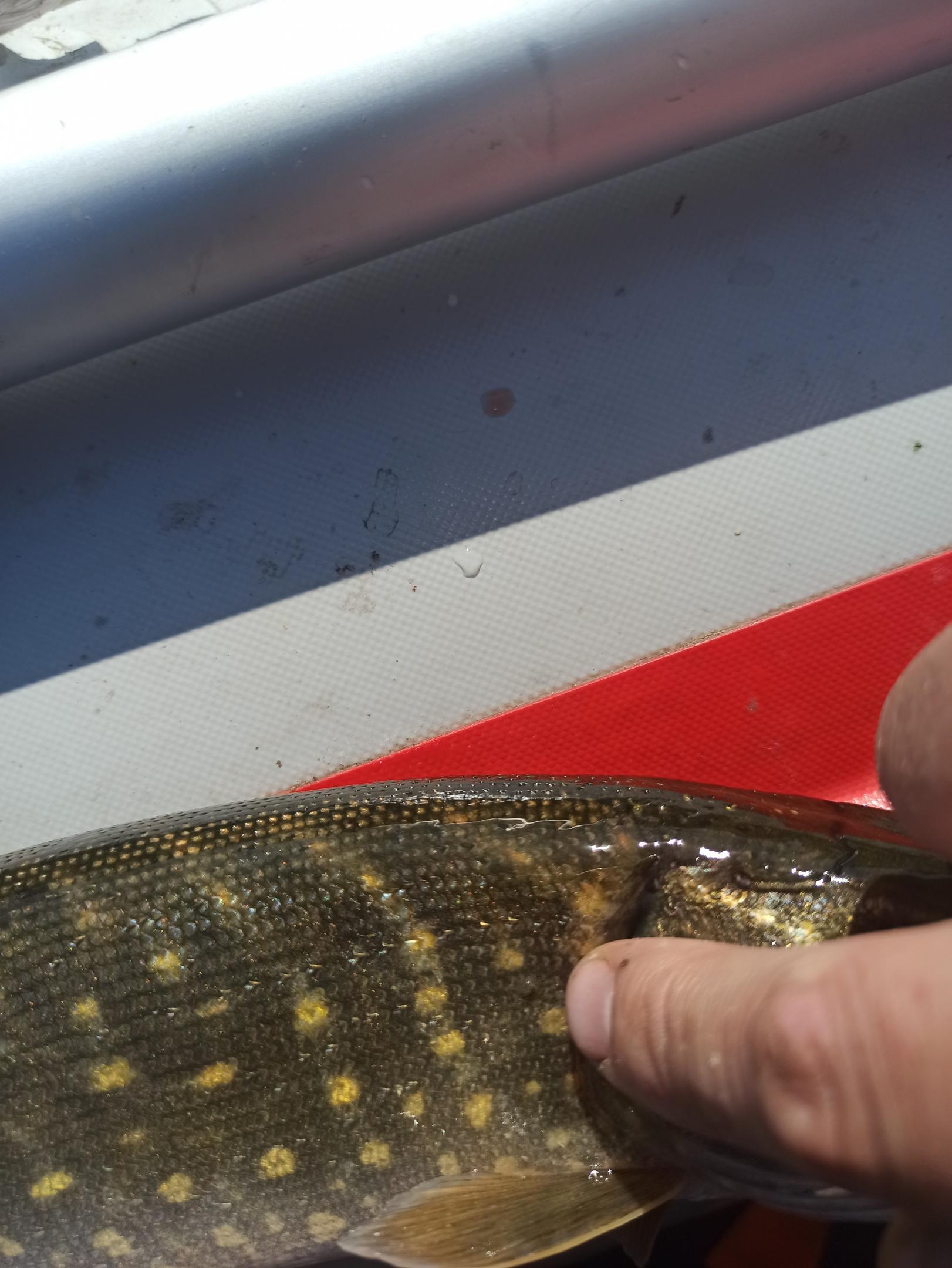 Что-то незаладился у меня этот год по щуке ... | Отчеты о рыбалке в Беларуси