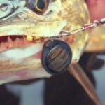 Рыбалка на блесны вертушки