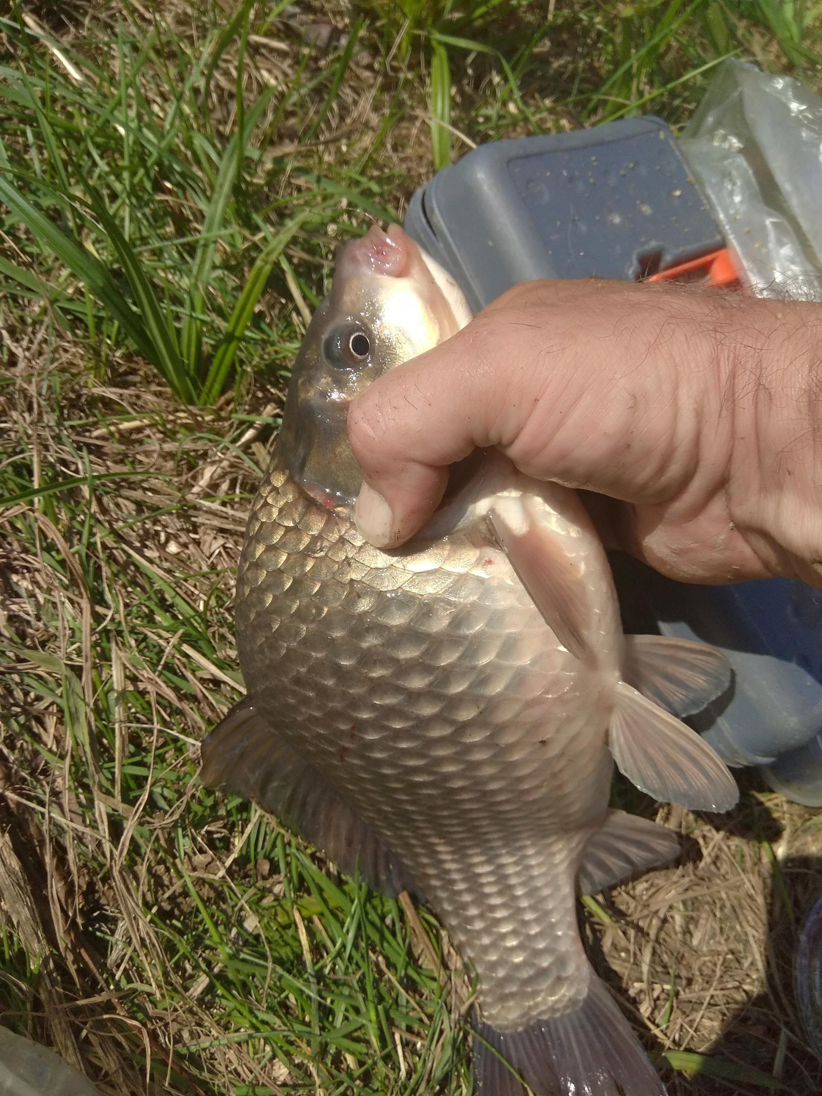 Вчера отметили на даче ДР жены, и пока ... | Отчеты о рыбалке в Беларуси